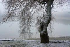Baum auf der Bank des Wintersees stockfotografie