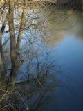 Baum auf der Flussquerneigung Lizenzfreies Stockfoto