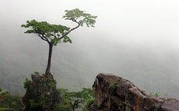 Baum auf der Steigung stockfotografie