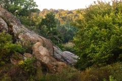 Baum auf der Steigung eines Steinberges umgeben durch Wald Stockfoto