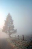 Baum auf der Straße im Nebel Lizenzfreies Stockfoto