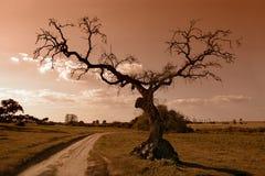 Baum auf die Art lizenzfreies stockfoto