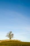 Baum auf die Oberseite lizenzfreies stockbild