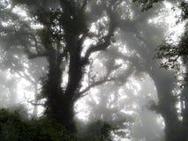 Baum auf Doi-Inthanon lizenzfreie stockbilder