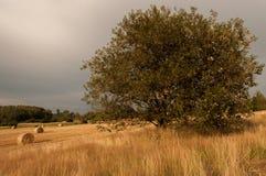 Baum auf einem Bauernhof stockbild