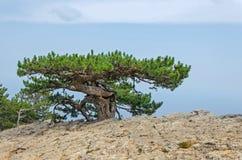 Baum auf einem Berg Lizenzfreies Stockfoto