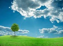 Baum auf einem Feld Stockfotografie