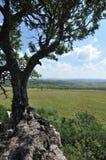 Baum auf einem Felsen Stockfoto