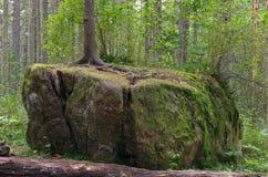 Baum auf einem Felsen stockbild