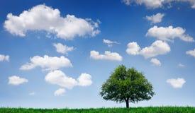 Baum auf einem Gebiet Stockfoto