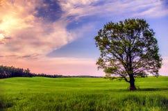 Baum auf einem Gebiet Stockfotografie