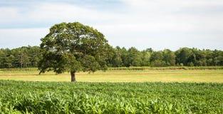 Baum auf einem Gebiet Lizenzfreie Stockfotografie