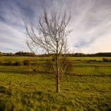 Baum auf einem Gebiet im Winter mit drastischen Himmeln Lizenzfreie Stockbilder