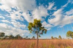 Baum auf einem Gebiet und einem perfekten Himmel lizenzfreies stockfoto