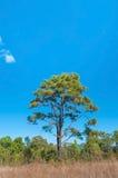 Baum auf einem Gebiet und einem perfekten Himmel stockfotografie