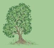 Baum auf einem grünen Hintergrund Stockfotos