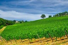 Baum auf einem grünen Wein-Feld stockfotografie