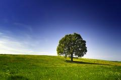 Baum auf einem Hügel Stockfotografie