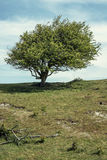 Baum auf einem Hügel Stockbilder