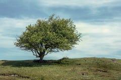 Baum auf einem Hügel Stockfotos