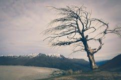 Baum auf einem Hügel mit Schnee-Spitzen-Gebirgshintergrund in Neuseeland mit Weinlese-Farbeffekten Stockfoto