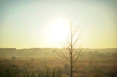 Baum auf einem Hintergrund der Felder vor dem nähernden Sonnenuntergang Stockfotos