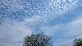 Baum auf einem Hintergrund des blauen Himmels in den kleinen Wolken lizenzfreies stockbild