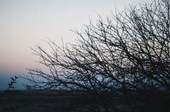 Baum auf einem Hintergrund eines Sonnenuntergangs Brunchhintergrundbeleuchtungs-Orange sunr Lizenzfreies Stockfoto
