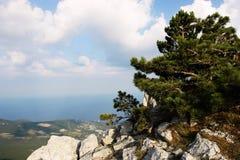 Baum auf einem Hintergrund von Bergen lizenzfreie stockfotos