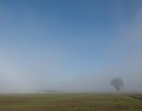 Baum auf einem Korngebiet im Nebel stockbilder
