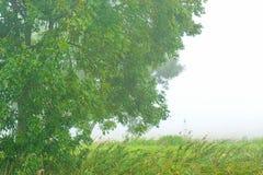 Baum auf einem nebeligen Gebiet mit Schilf im Herbst Stockfoto