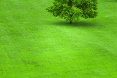 Baum auf einem Rasen des grünen Grases stockfotos