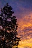 Baum auf einem schönen bunten Sonnenaufgang Stockbilder