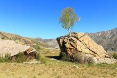 Baum auf einem Stein Stockfotografie