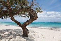 Baum auf einem Strand Lizenzfreie Stockfotografie