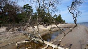 Baum auf einem Strand Stockfotos