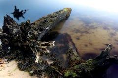 Baum auf einem Strand Lizenzfreie Stockfotos