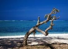 Baum auf einem Strand gegen eine Lagune Stockbild