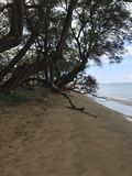 Baum auf einem Strand in Hawaii Stockbilder