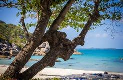 Baum auf einem Strand und sehen Hintergrund Samui Insel Lizenzfreies Stockbild