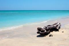 Baum auf einem wundervollen tropischen Strand Stockbilder