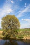Baum auf einer Flussquerneigung. Lizenzfreie Stockbilder