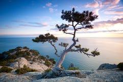Baum auf einer Klippe Stockbilder