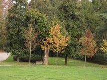 Baum auf einer Reihe stockfotos