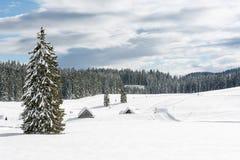 Baum auf einer schneebedeckten Wiese Stockbild