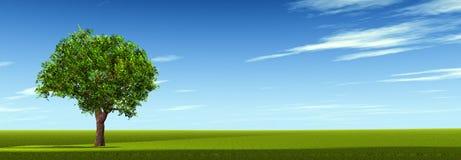Baum auf Feld lizenzfreie stockfotografie