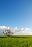 Baum auf Feld Lizenzfreie Stockfotos