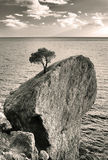 Baum auf Felsen Lizenzfreies Stockfoto