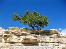 Baum auf Felsenplatte stockfotos