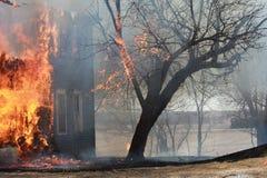 Baum auf Feuer Stockfotografie